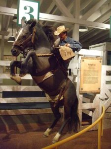 Bucking Bronc Statue in the Cowboy Museum